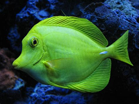 Wallpapers Home Decor Green Fish Photograph By Wendy J St Christopher