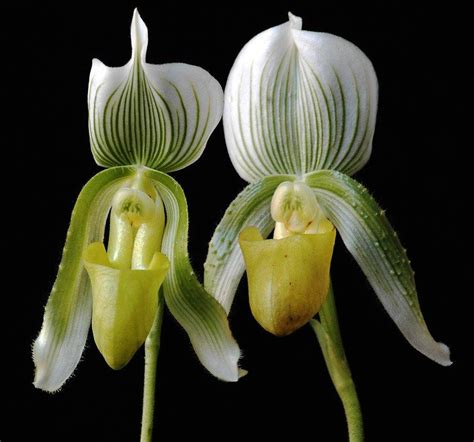 tips for getting an orchid to bloom