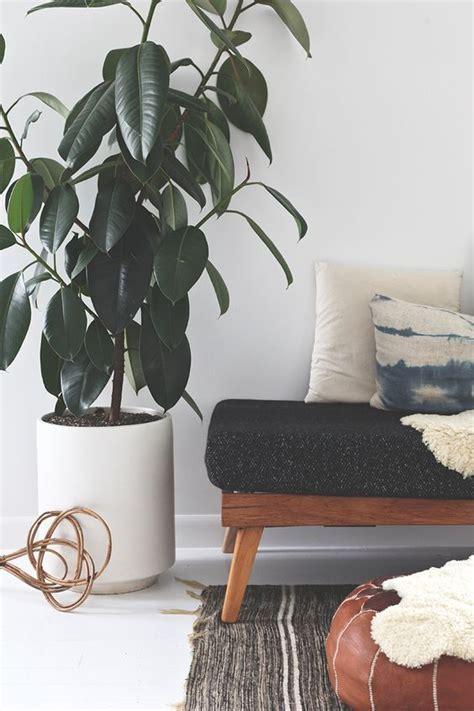 chic ways  rock plants   interiors digsdigs