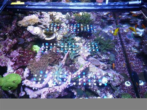 Lu Led Untuk Aquarium chooses orphek pr 156 xp orphek