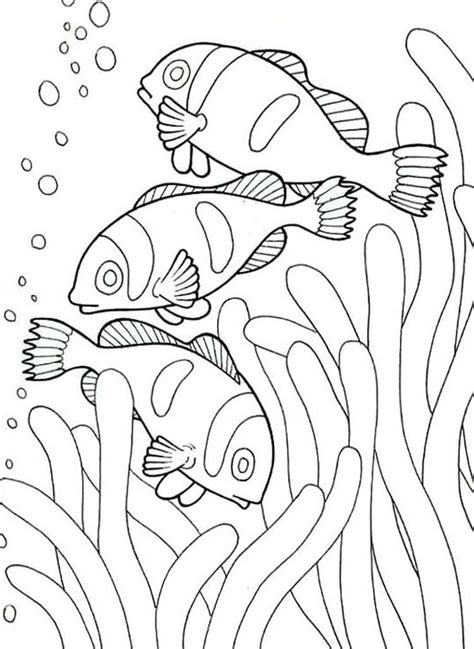 read morecoloring pages  sea animals clown fish fish