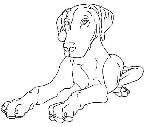 real puppies colouring pages