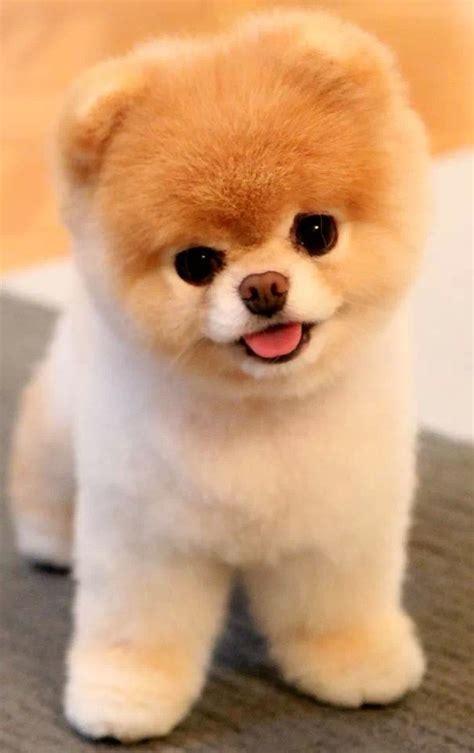 imagenes de animales adorables perrito peluche perros pinterest perro peluche