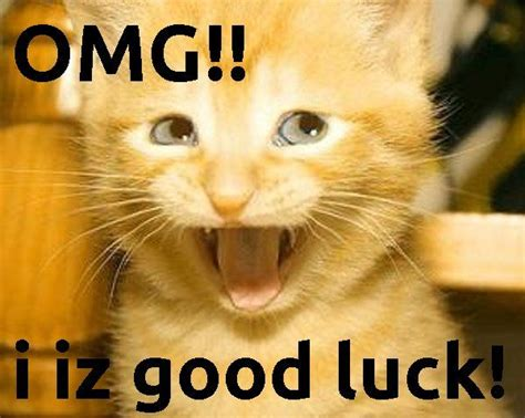 Good Cat Meme - good luck charm great cat memes pinterest