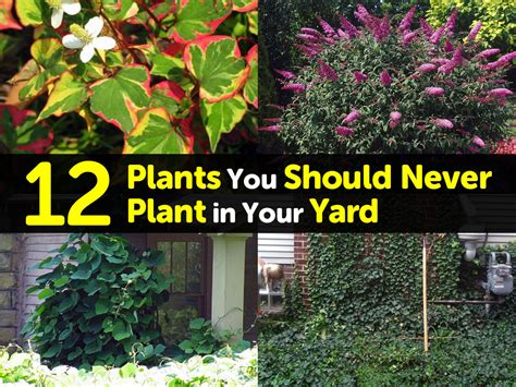 How To Plant A Garden In Your Backyard by 12 Plants You Should Never Plant In Your Yard