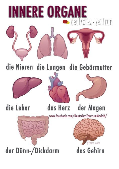 innere arzt innere organe wortschatz grammatik alem 225 n german