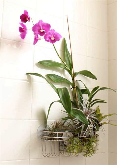 Badezimmer Dekorieren Lila by Tipps Zur Orchidee Pflege Wie 252 Berdauert Die Orchidee