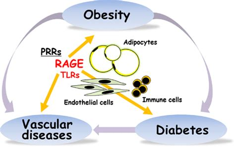 pattern recognition receptors and obesity frontiers rage mediated inflammation type 2 diabetes