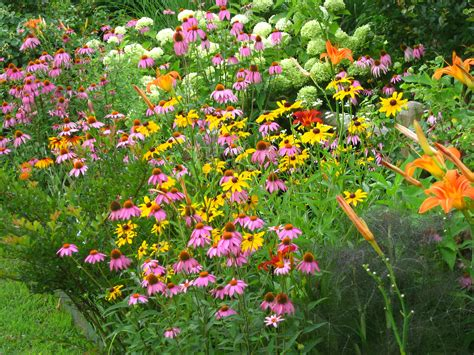 flowers for backyard butterfly gardens get plants for less