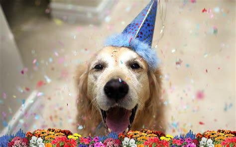 afbeelding bloemen met dier foto hond verjaardag bloemen bureaublad achtergronden