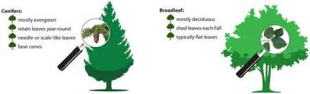 burnaby tree bylaw