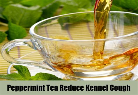 15 effective home remedies for kennel cough