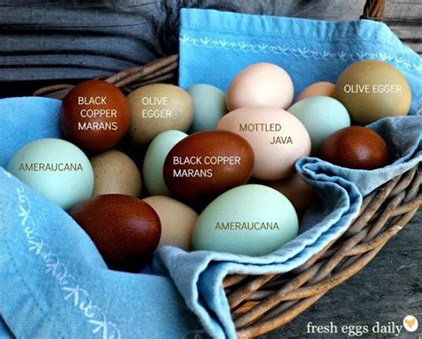 what color are blue eggs what causes some chickens to lay brown eggs and some to