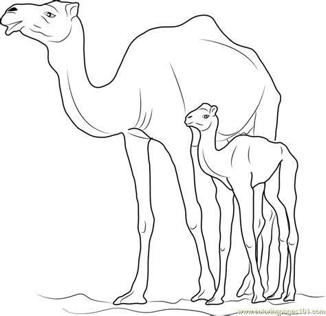 camel with kid coloring page free camel coloring pages
