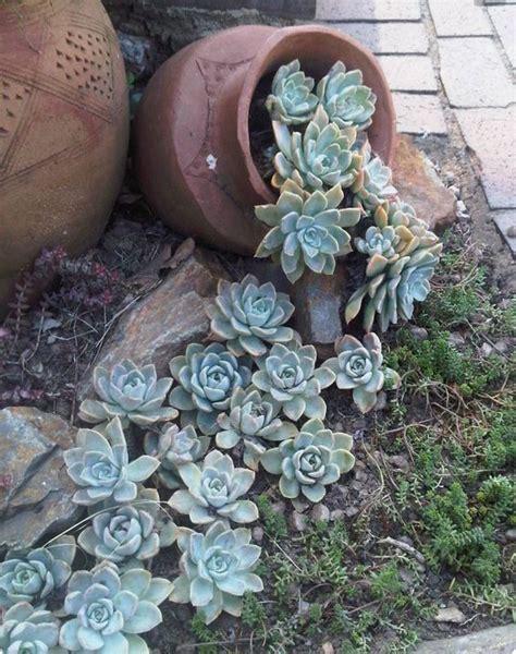 aiuole giardino fai da te se hai il pollice verde le aiuole con pietre naturali non