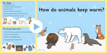 Keeping Warm Like The Swedes Do by How Do Animals Keep Warm Powerpoint How Do Animals Keep Warm