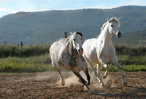 imagenes de animales en movimiento animales y animales 187 imagenes de caballos