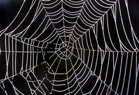 spider web background cool spider webs backgrounds www imgkid the image