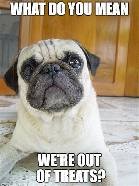 pugs meme 8 pug memes what every deserves