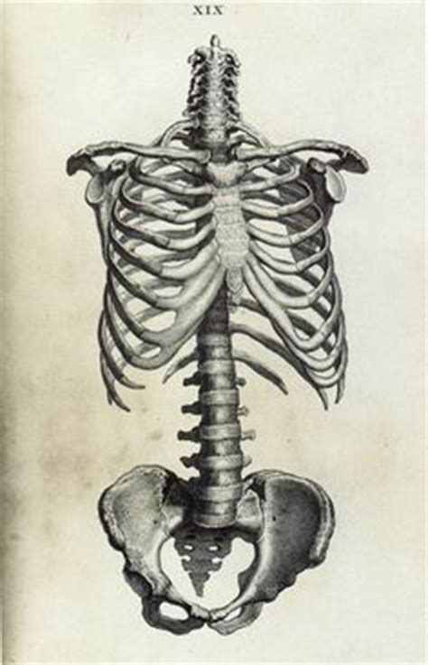 1000 images about skeleton drawings on pinterest