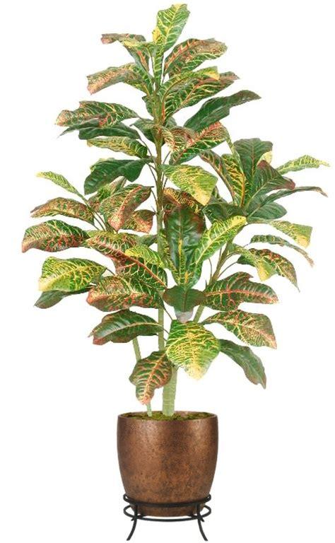 floor plant 20 best images about indoor plants on pinterest plants