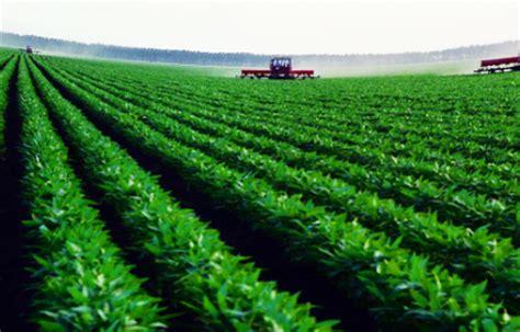 pengertian  jenis jenis tanaman pangan  hortikultura