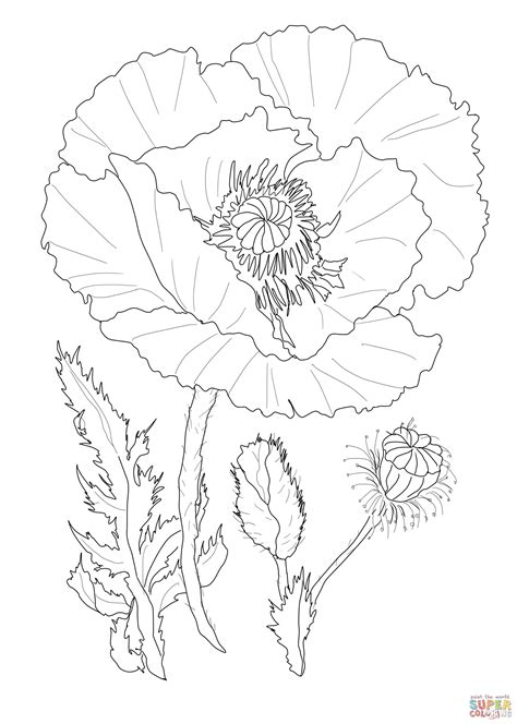 coloring page of a poppy flower poppy coloring pages