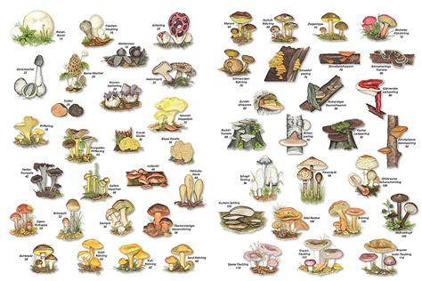 Pilze Im Garten Ziehen by Pilze Selber Ziehen Chignons Z Chten So Klappt 39 S