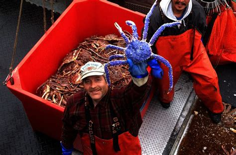blue colored king crab in alaska read more