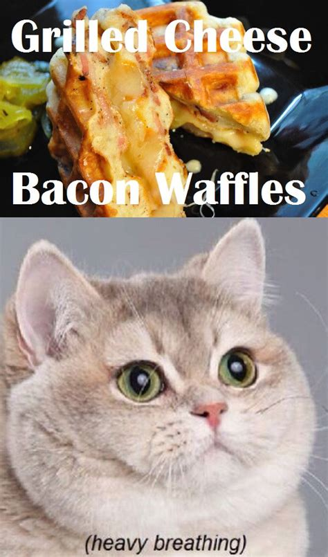 Fat Cat Heavy Breathing Meme - grilled cheese bacon waffles humor pinterest