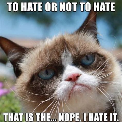 Grumpy Cat Yes Meme - my kitty crush i m in love with grumpy cat yes i know
