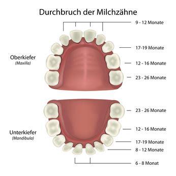 wann sind lymphknoten geschwollen funktion der z 228 hne im gebiss und zahn position im zahnschema