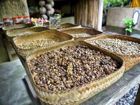 Luwak Coffee kopi luwak ada indonesia