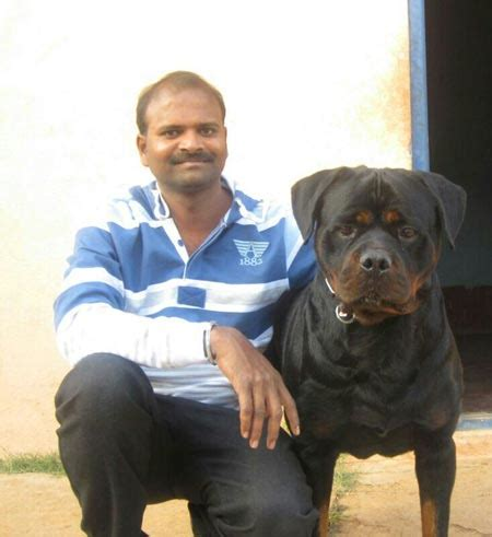 rottweiler india best rottweiler kennels in india photo