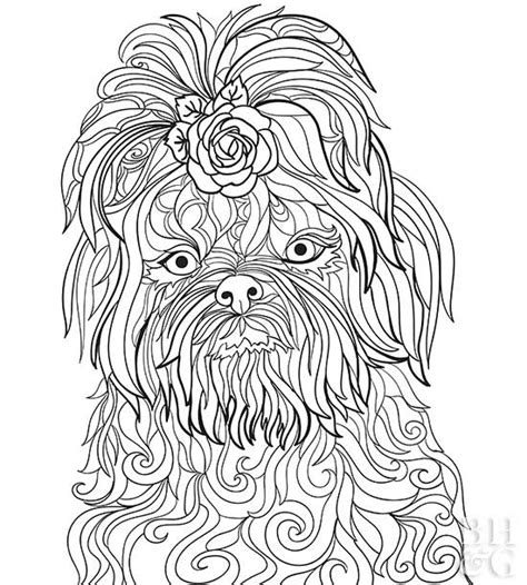 coloring pages of shih tzu dogs pet coloring pages