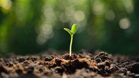 What Is A Church Planter by Top 10 Church Planting Tips Ct Pastors
