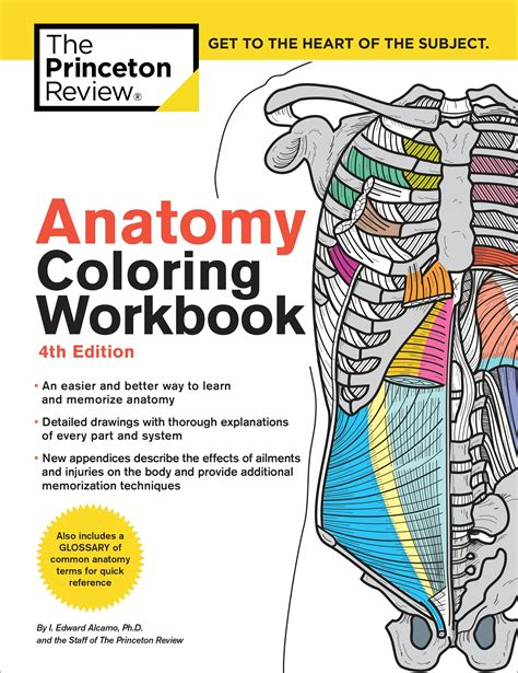 kaplan anatomy coloring book fourth edition anatomy coloring workbook 4th edition by the princeton