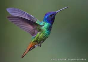 new study how the hummingbird performs stunning feats of