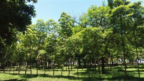 mirador sur flora tropical picture of parque mirador sur santo