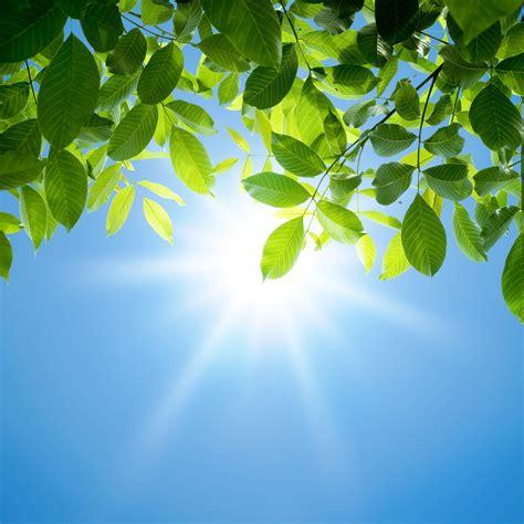 Pflanzen Sonne by Un Livret Pour L 233 T 233 R 233 Surrection Sainte Famille
