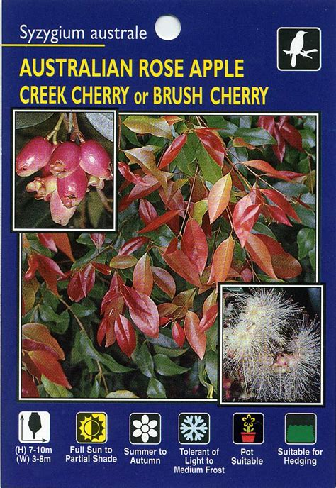 Wholesale Fruit Trees - scrub cherry brush cherry creek cherry syzygium australe