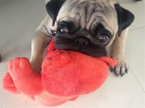 pugs toys pug pug toys