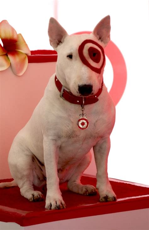 puppy target bullseye target puppy www pixshark images galleries with a bite