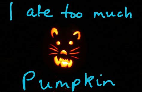 pumpkin for constipation feeding pumpkin to cats for constipation or diarrhea