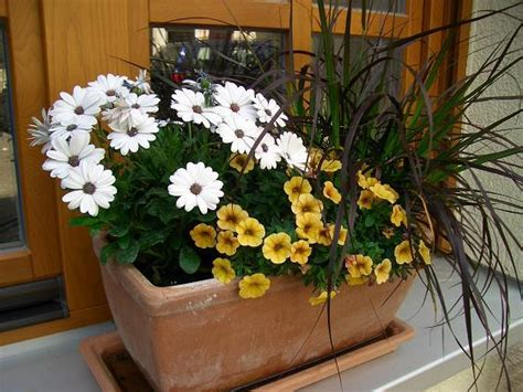balkon herbst design - Pflanzen Für Nordseite