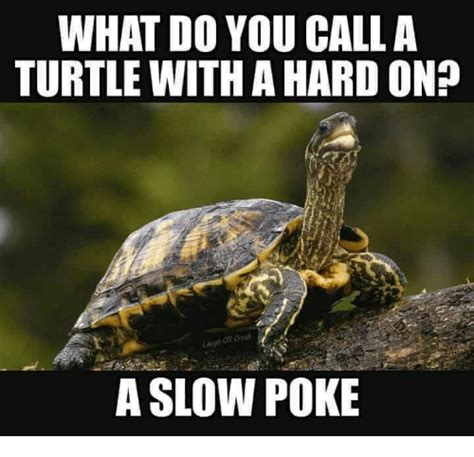 turtle meme what do you call a turtle with a hardon a poke