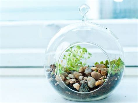 create a miniature garden terrariums look exotic and high maintenance but they re actually one