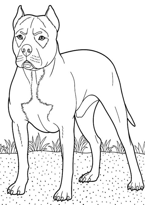 coloring pages of boxer puppies boxer dog guarding at backyard coloring pages boxer dog
