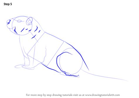how to draw a learn how to draw a yellow bellied marmot rodents step