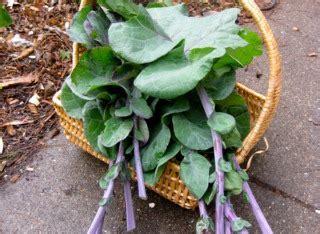 Legumes Qui Poussent Vite by Des L 233 Gumes Qui Poussent Vite